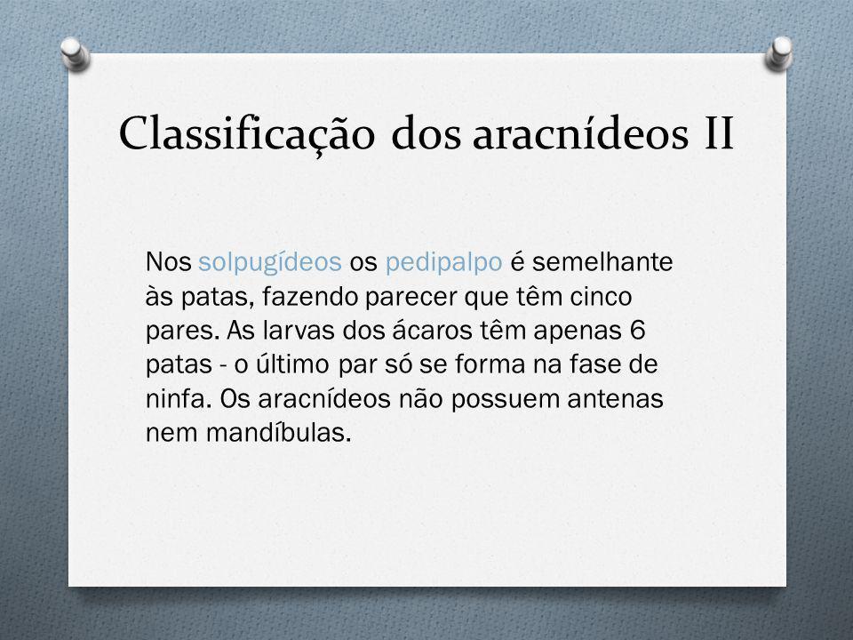 Classificação dos aracnídeos II