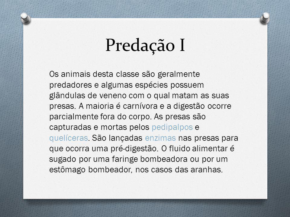 Predação I