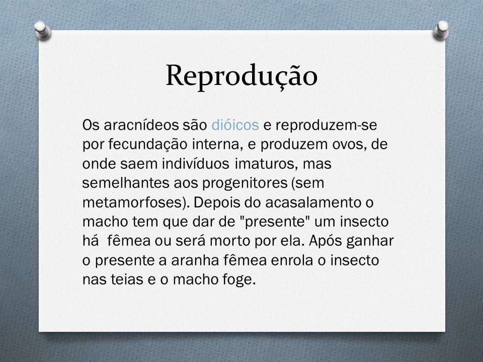 Reprodução