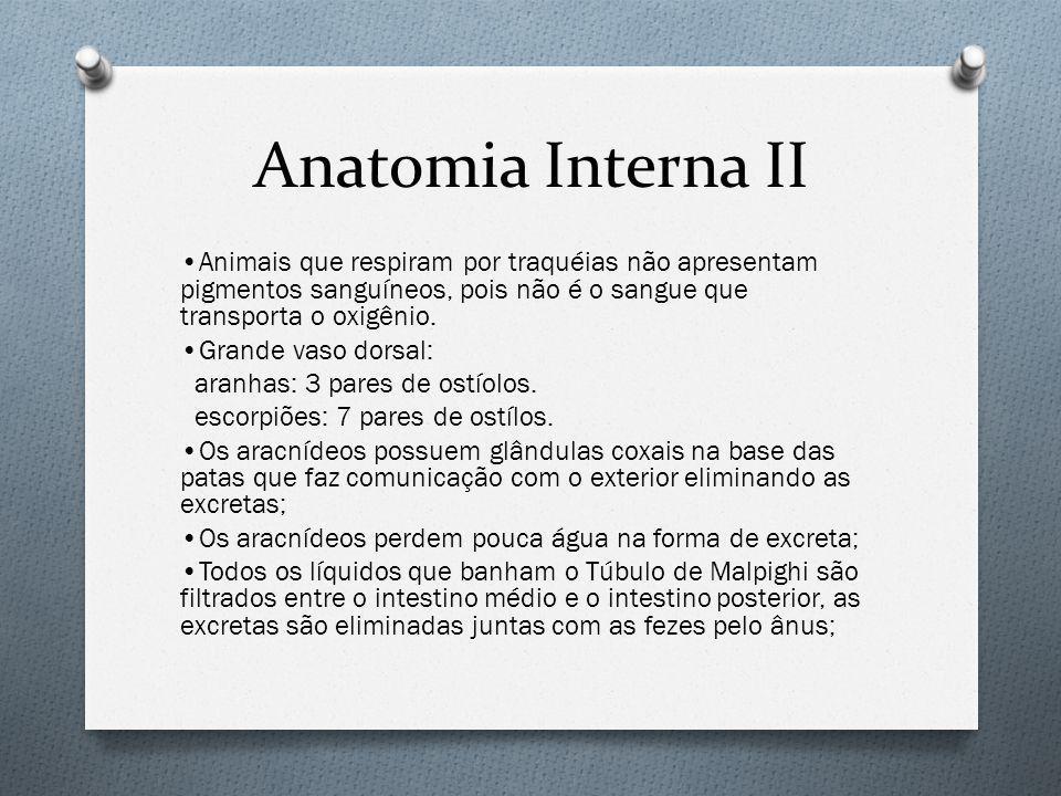 Anatomia Interna II