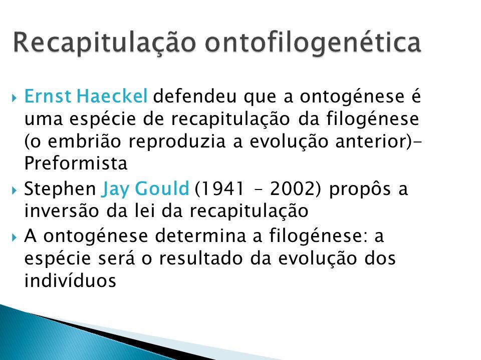 Recapitulação ontofilogenética