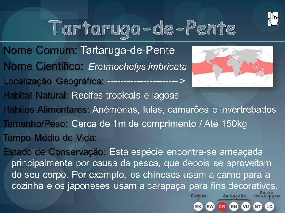 Tartaruga-de-Pente Nome Comum: Tartaruga-de-Pente