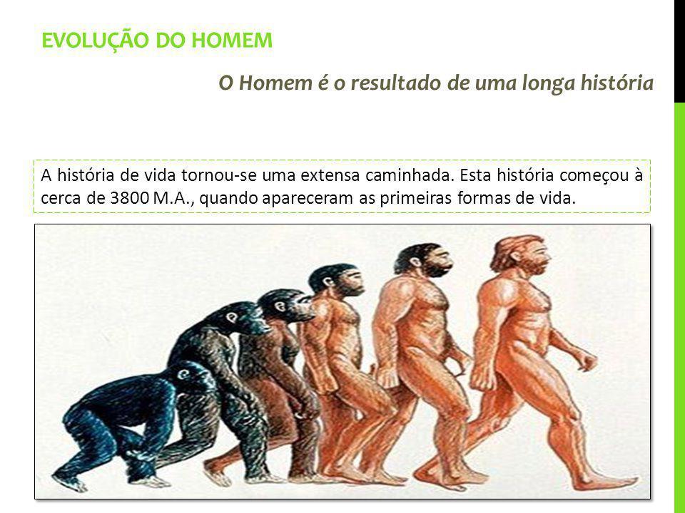 Evolução do Homem O Homem é o resultado de uma longa história