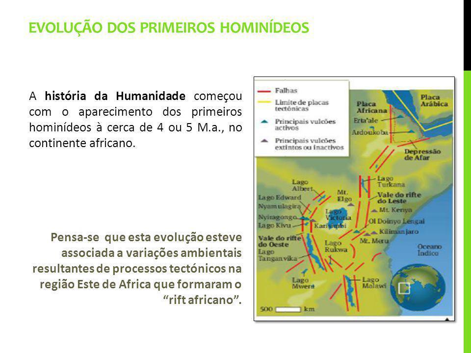 Evolução dos primeiros hominídeos