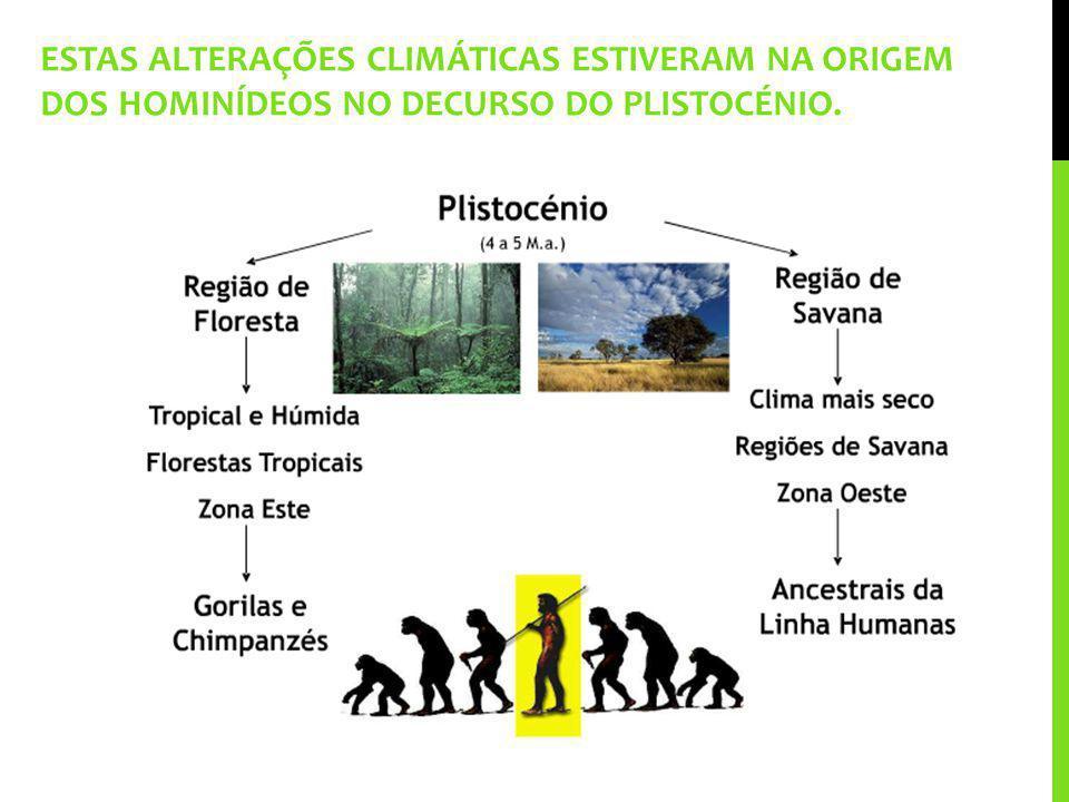 ESTAS ALTERAÇÕES CLIMÁTICAS ESTIVERAM NA ORIGEM DOS HOMINÍDEOS NO DECURSO DO PLISTOCÉNIO.