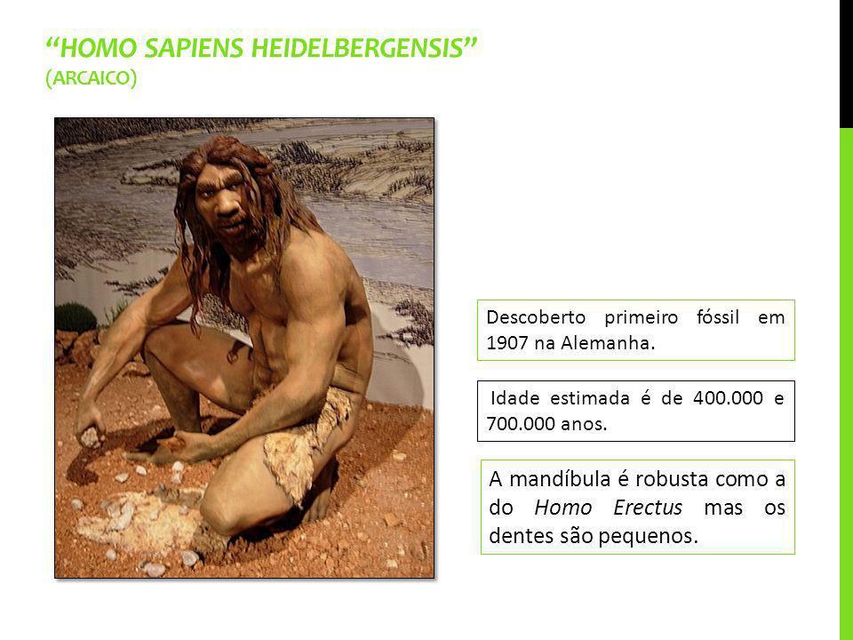 Homo sapiens heidelbergensis (arcaico)