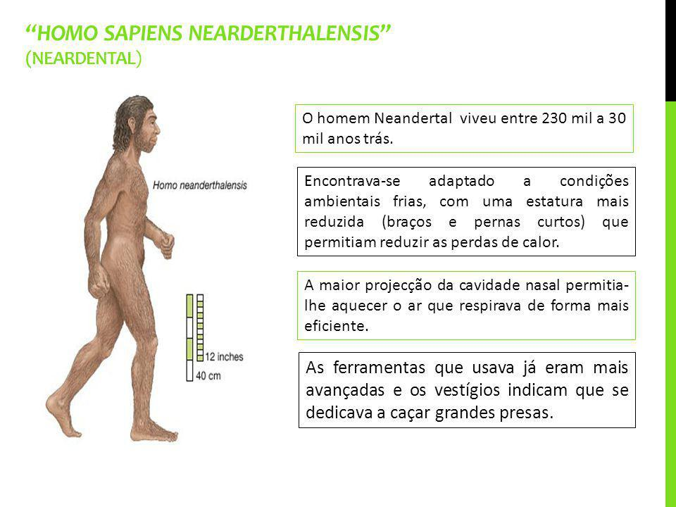 Homo sapiens nearderthalensis (Neardental)