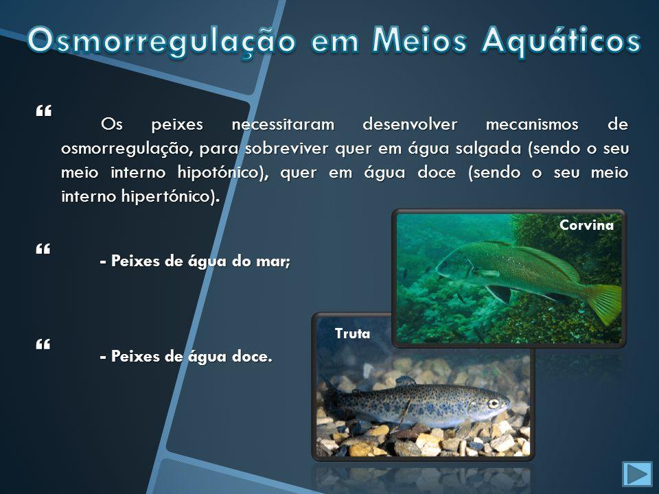 Osmorregulação em Meios Aquáticos