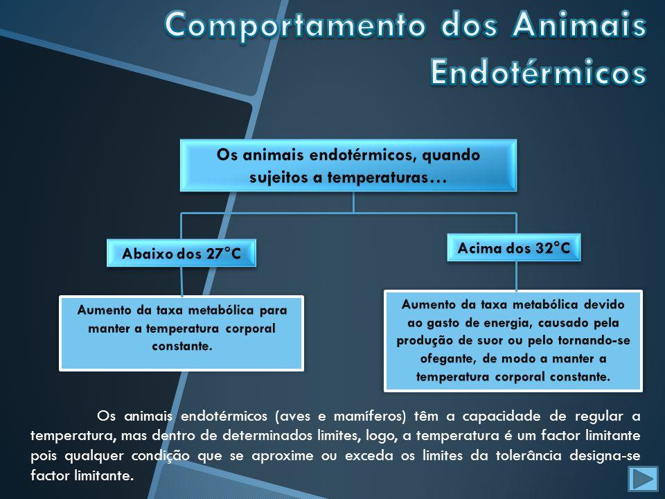 Comportamento dos Animais Endotérmicos