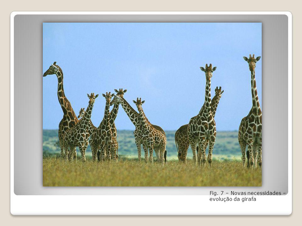 Fig. 7 – Novas necessidades – evolução da girafa