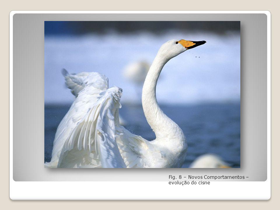 Fig. 8 – Novos Comportamentos – evolução do cisne