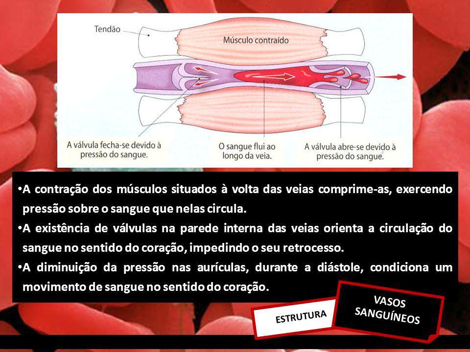 A contração dos músculos situados à volta das veias comprime-as, exercendo pressão sobre o sangue que nelas circula.
