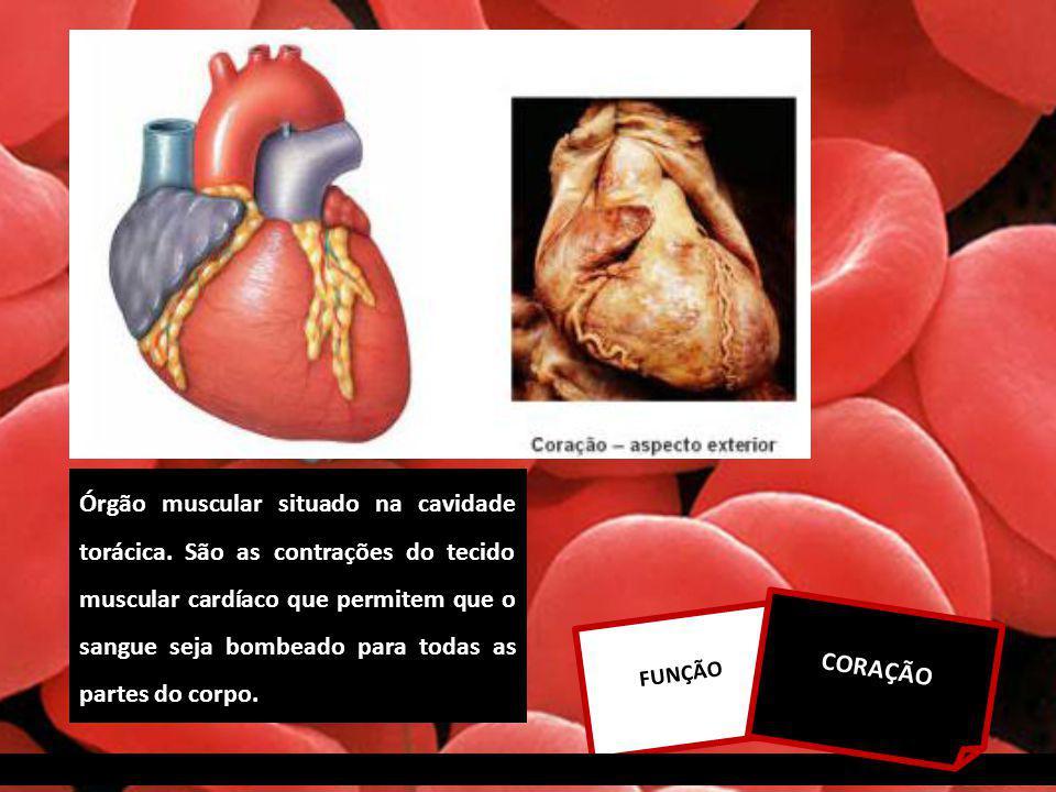 Órgão muscular situado na cavidade torácica