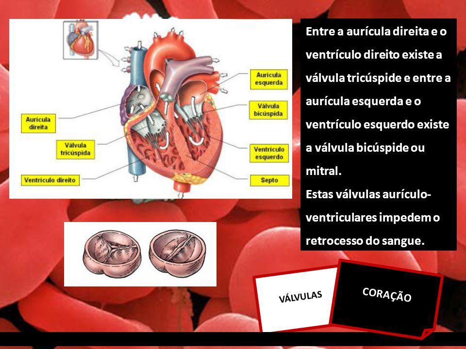 Estas válvulas aurículo-ventriculares impedem o retrocesso do sangue.