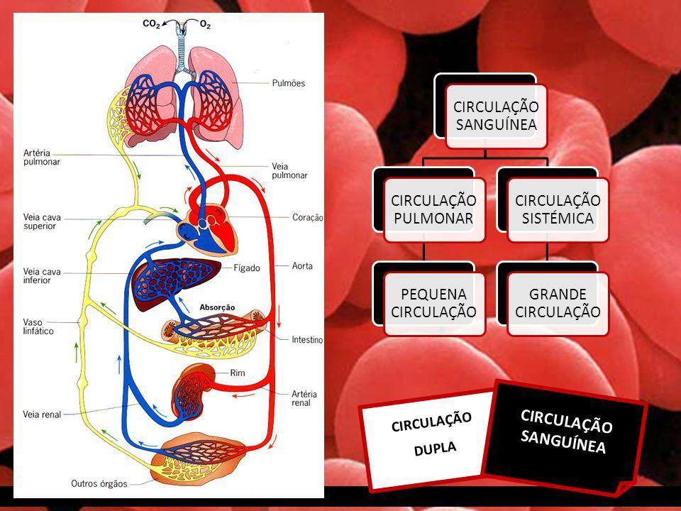CIRCULAÇÃO SANGUÍNEA CIRCULAÇÃO SANGUÍNEA CIRCULAÇÃO PULMONAR