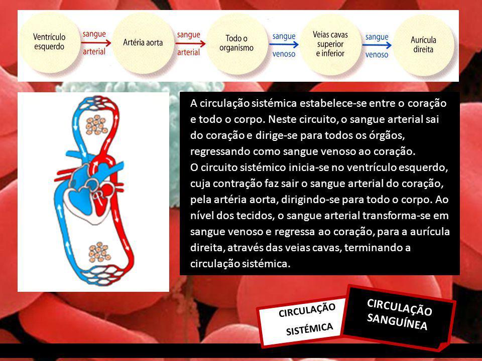 A circulação sistémica estabelece-se entre o coração e todo o corpo