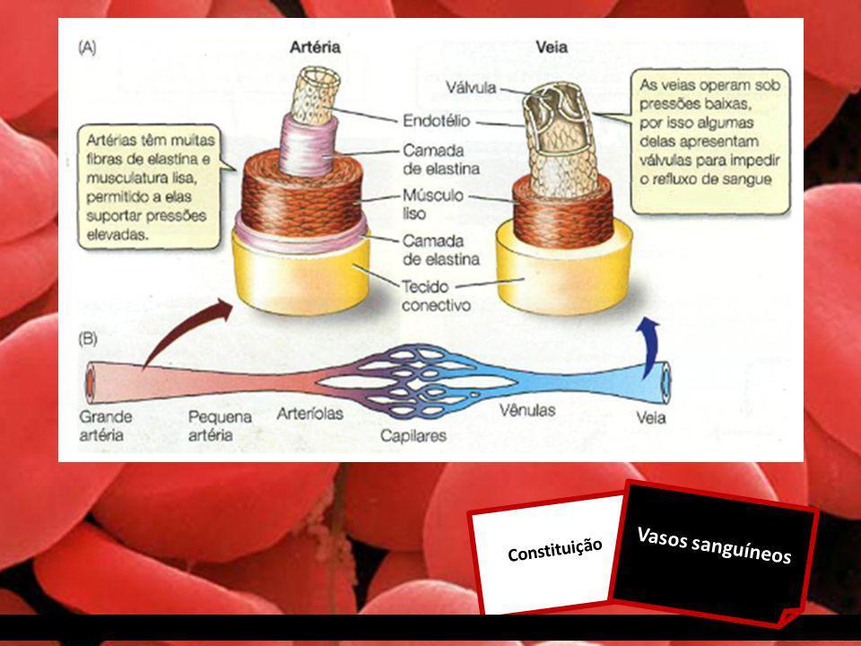 Vasos sanguíneos Constituição
