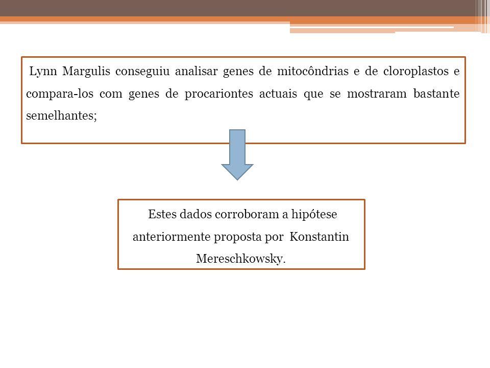 Lynn Margulis conseguiu analisar genes de mitocôndrias e de cloroplastos e compara-los com genes de procariontes actuais que se mostraram bastante semelhantes;