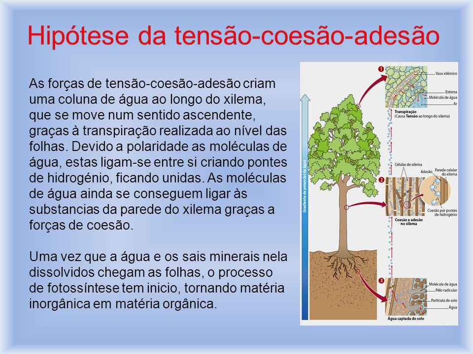 Hipótese da tensão-coesão-adesão