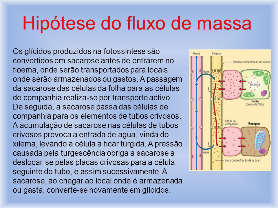 Hipótese do fluxo de massa