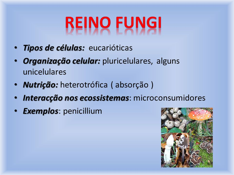 Reino fungi Tipos de células: eucarióticas
