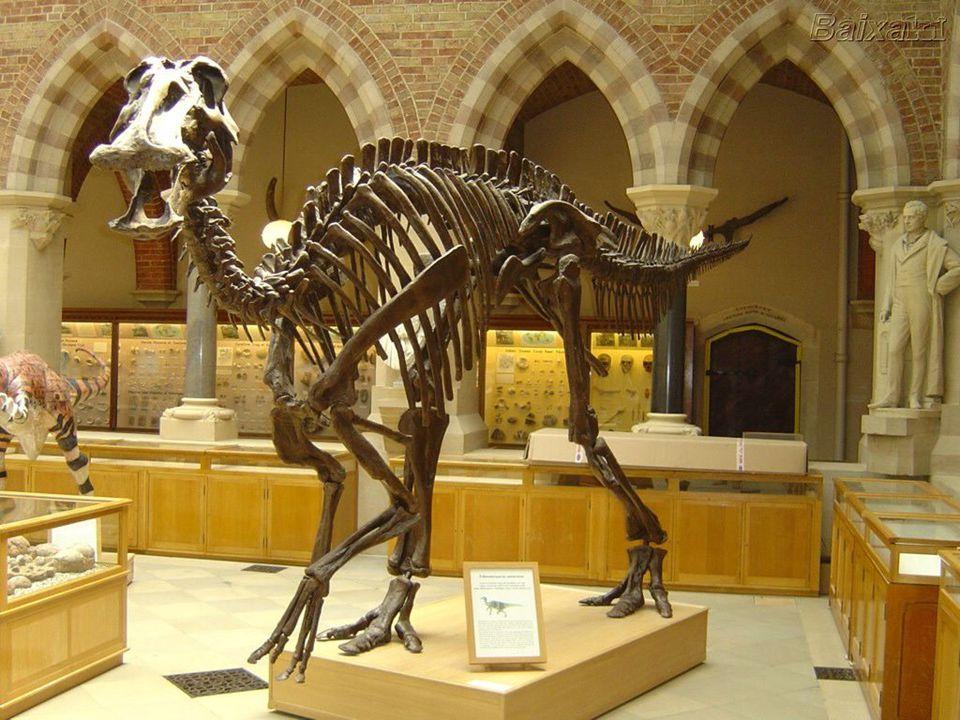 Imagens d exposições de arqueologia e museus