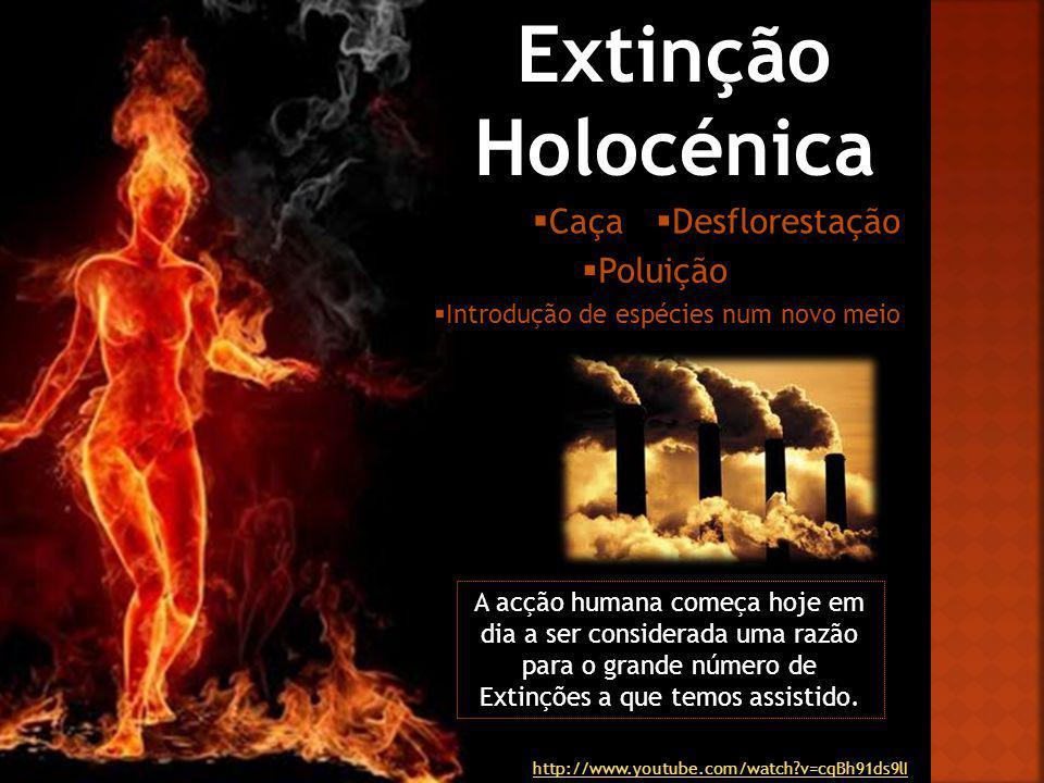 Extinção Holocénica Caça Desflorestação Poluição