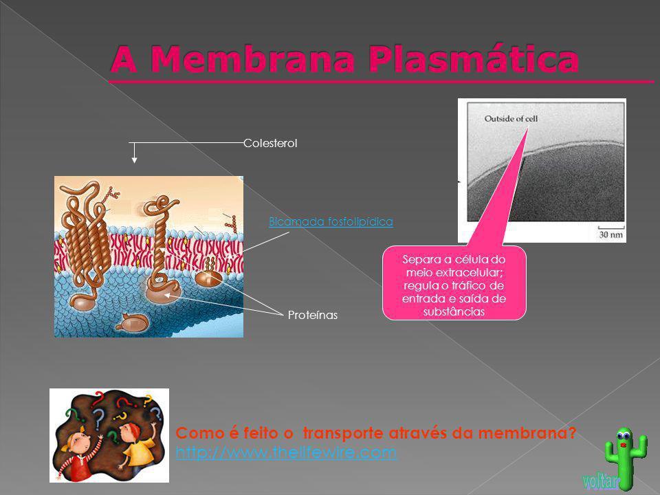 A Membrana Plasmática Como é feito o transporte através da membrana