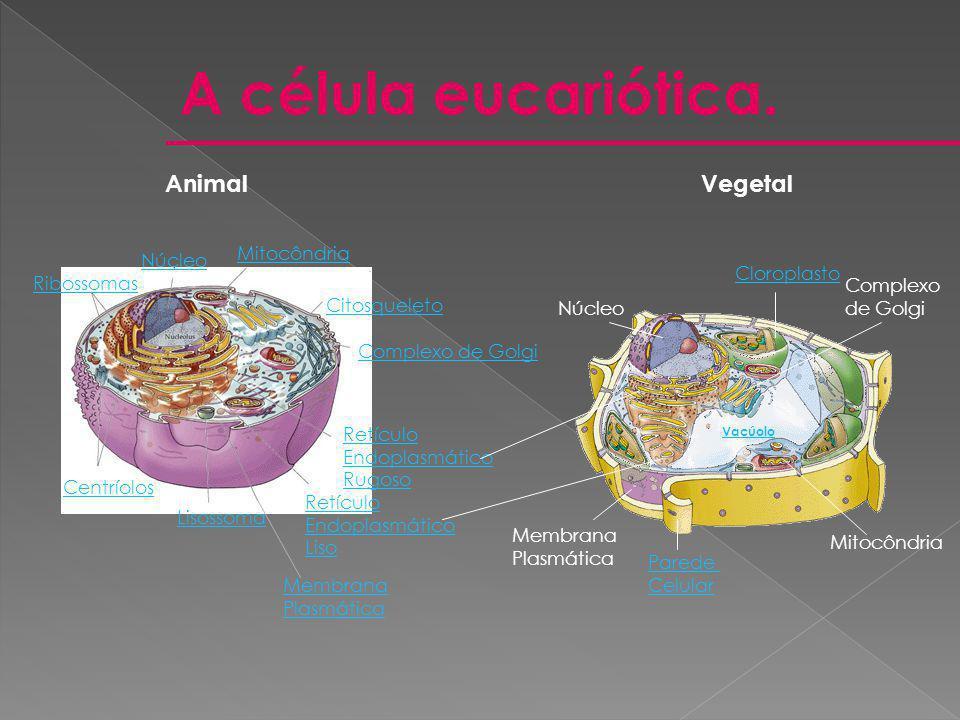 A célula eucariótica. Animal Vegetal Mitocôndria Núcleo Cloroplasto
