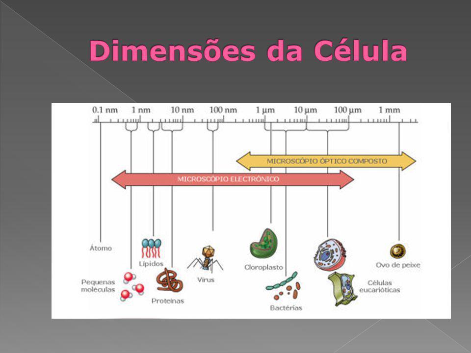 Dimensões da Célula