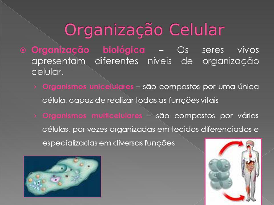 Organização Celular Organização biológica – Os seres vivos apresentam diferentes níveis de organização celular.