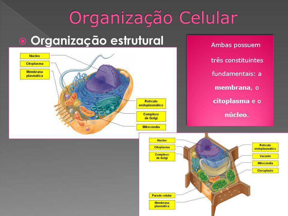 três constituintes fundamentais: a membrana, o citoplasma e o núcleo.