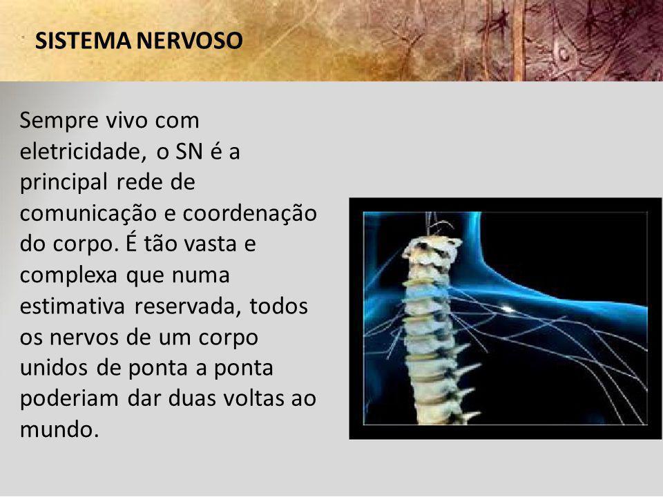 SISTEMA NERVOSO Sempre vivo com. eletricidade, o SN é a. principal rede de. comunicação e coordenação.
