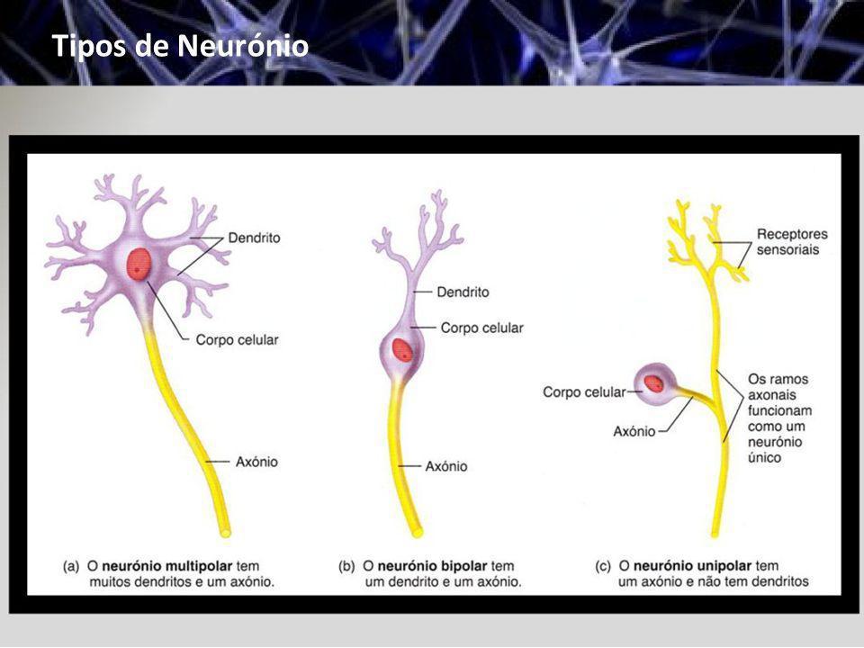 Tipos de Neurónio