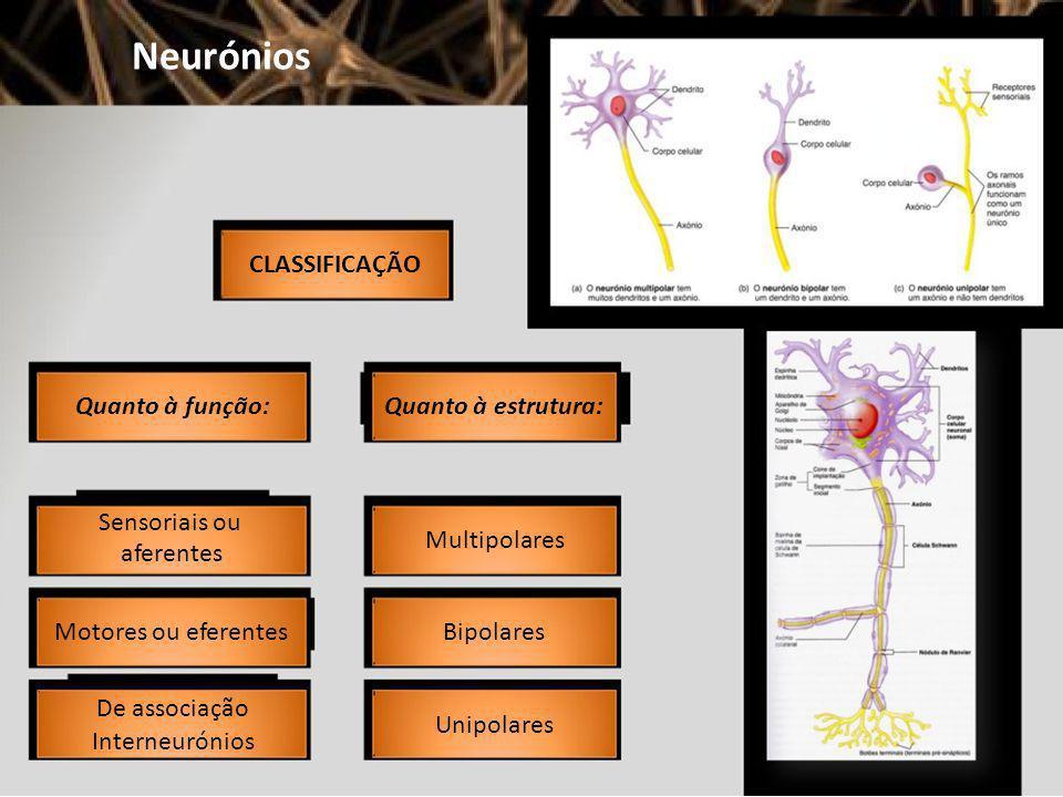 Neurónios CLASSIFICAÇÃO Quanto à função: Quanto à estrutura: