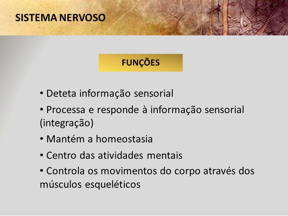 • Deteta informação sensorial