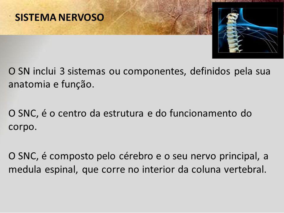 SISTEMA NERVOSO O SN inclui 3 sistemas ou componentes, definidos pela sua. anatomia e função.