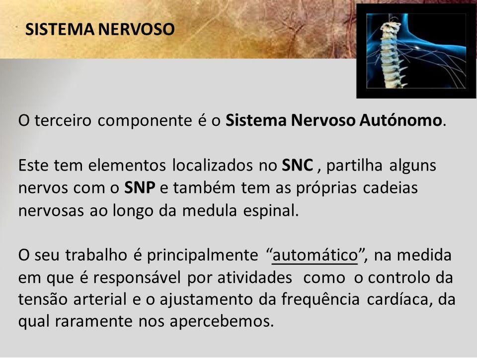 SISTEMA NERVOSO O terceiro componente é o Sistema Nervoso Autónomo.