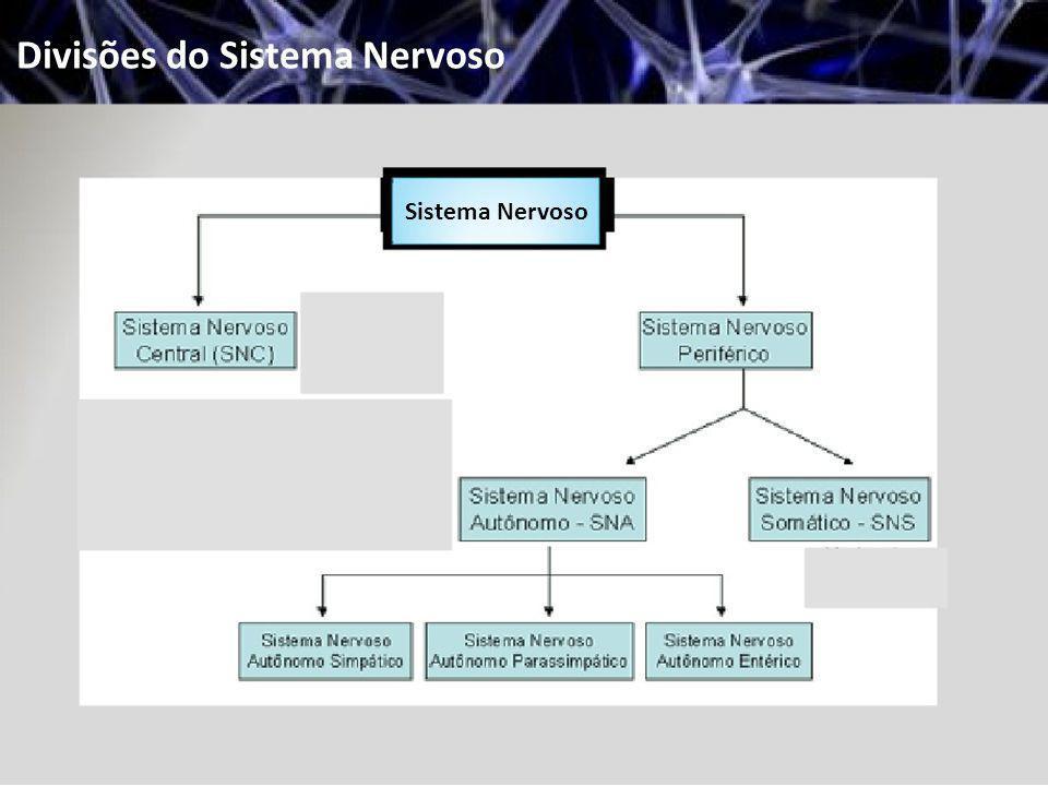 Divisões do Sistema Nervoso