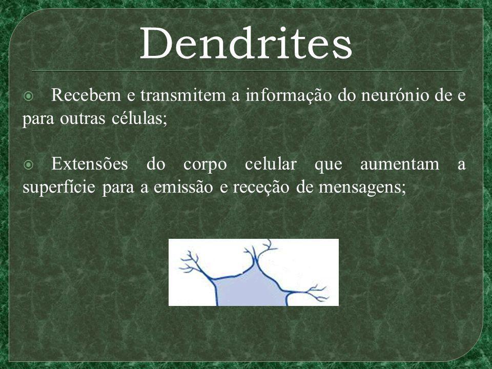 Dendrites Recebem e transmitem a informação do neurónio de e para outras células;