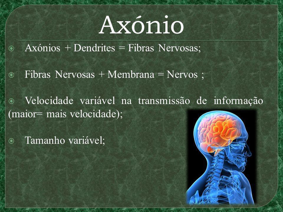 Axónio Axónios + Dendrites = Fibras Nervosas;