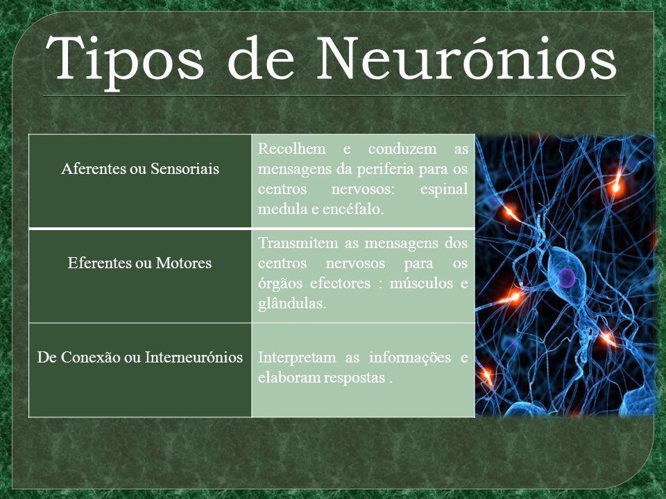 Tipos de Neurónios Aferentes ou Sensoriais