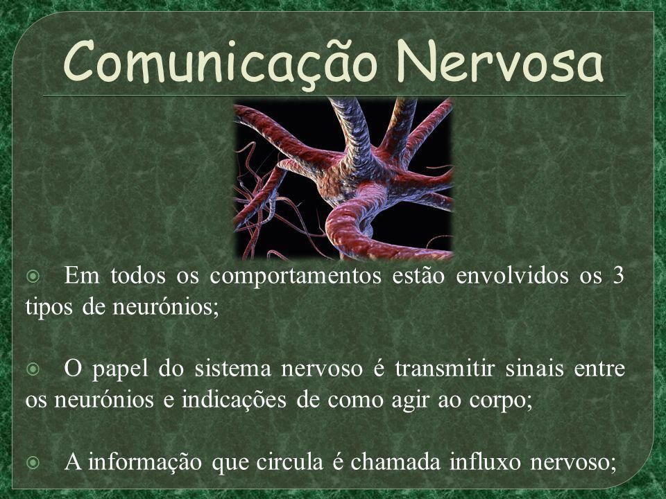 Comunicação Nervosa Em todos os comportamentos estão envolvidos os 3 tipos de neurónios;