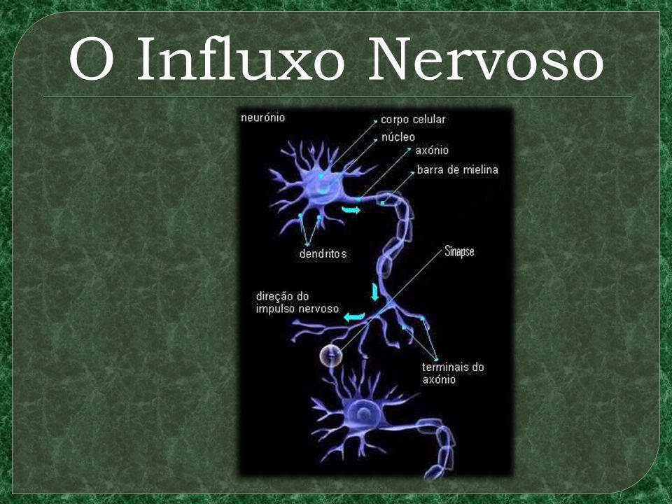 O Influxo Nervoso