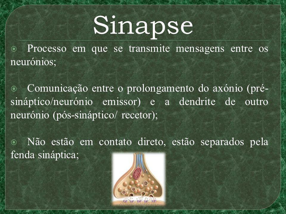 Sinapse Processo em que se transmite mensagens entre os neurónios;