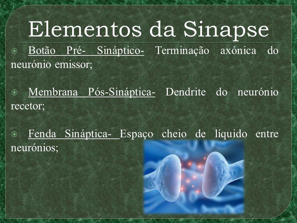 Elementos da Sinapse Botão Pré- Sináptico- Terminação axónica do neurónio emissor; Membrana Pós-Sináptica- Dendrite do neurónio recetor;