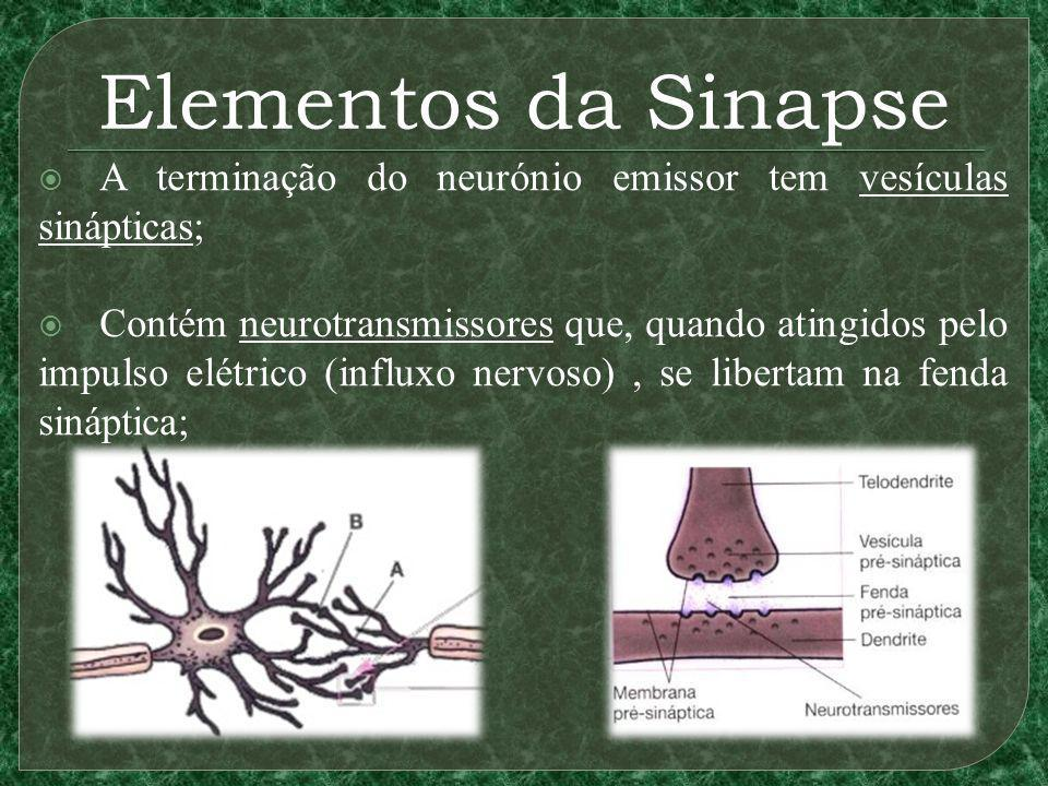 Elementos da Sinapse A terminação do neurónio emissor tem vesículas sinápticas;