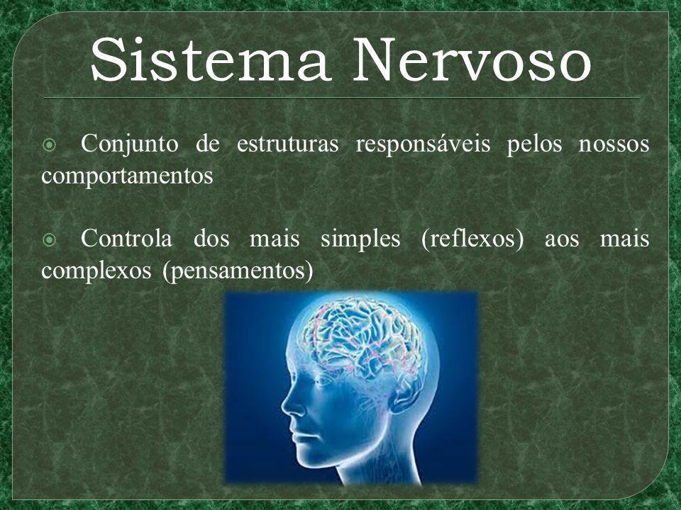 Sistema Nervoso Conjunto de estruturas responsáveis pelos nossos comportamentos.