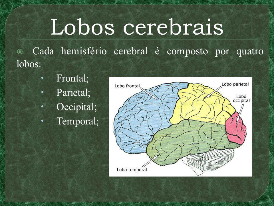 Lobos cerebrais Cada hemisfério cerebral é composto por quatro lobos: