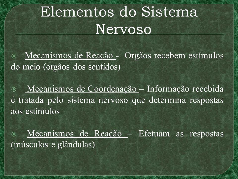 Elementos do Sistema Nervoso